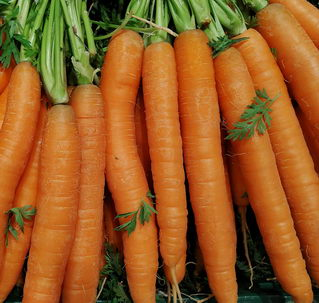 Karottenöl Test