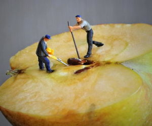 Apfelentkerner Test